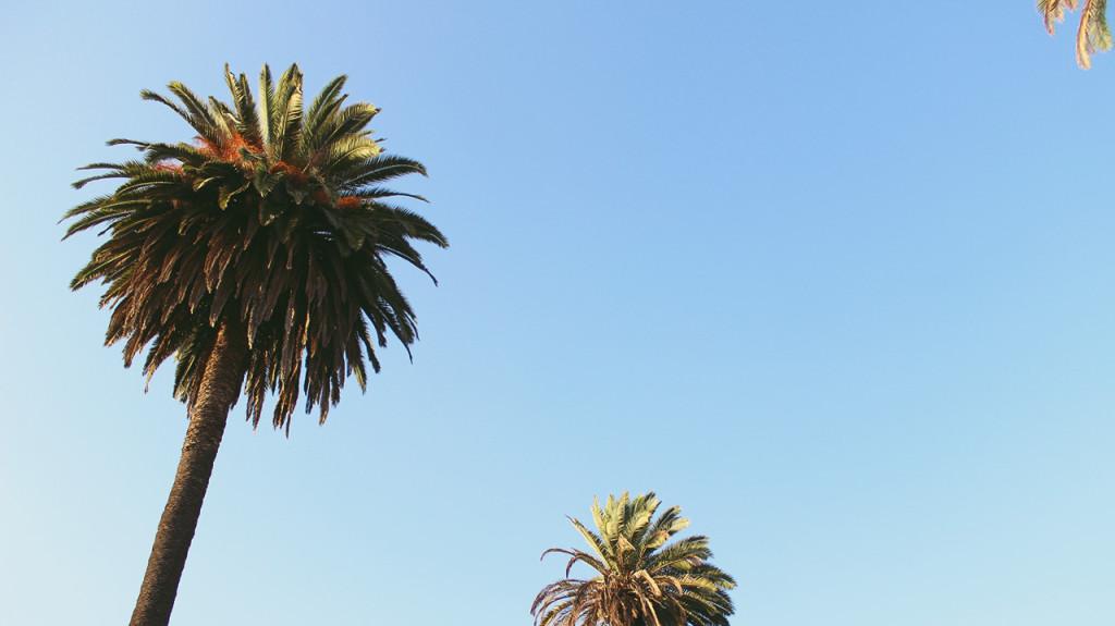 Som zaťažený na palmy