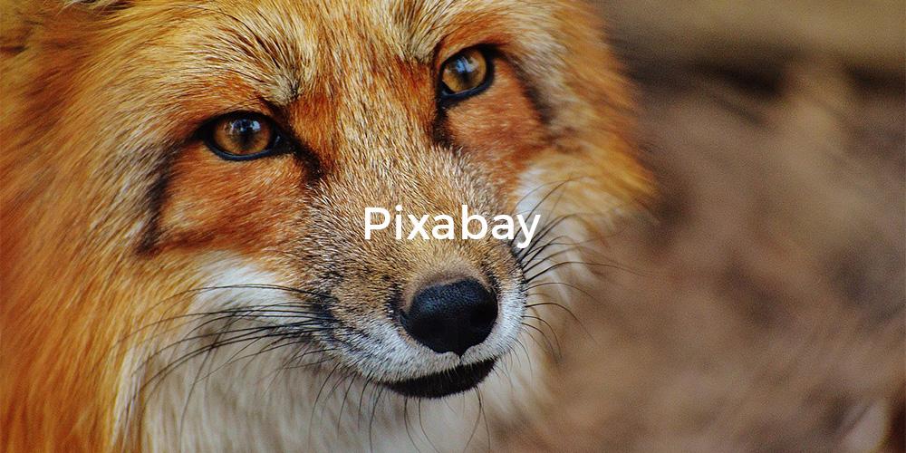 13pixabay