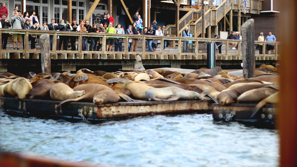 san_francisco_sea_lions