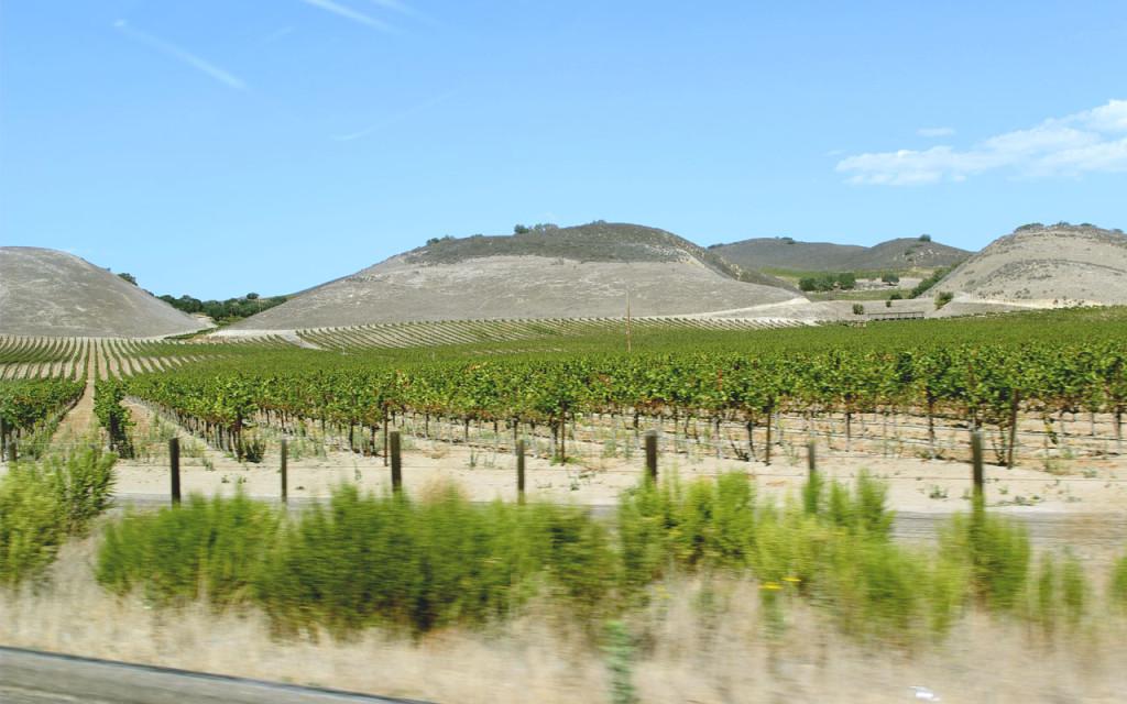 vinohrady_california